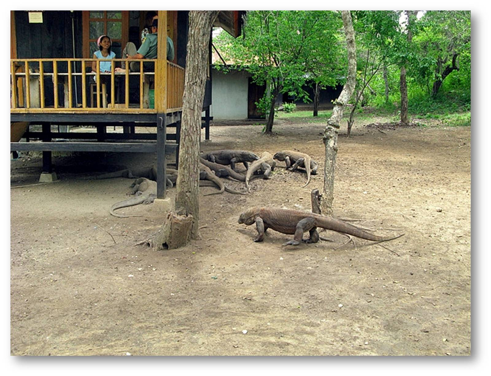 Pulau komodo, salah satu 7 keajaiban dunia dengan sejuta pesona