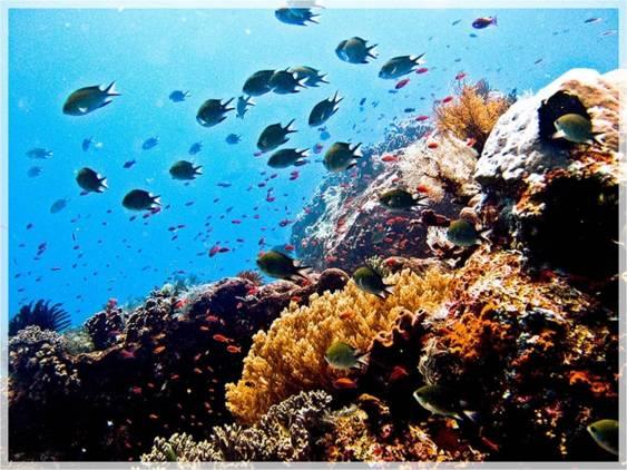 Pulau Komodo sebagai Keajaiban Dunia